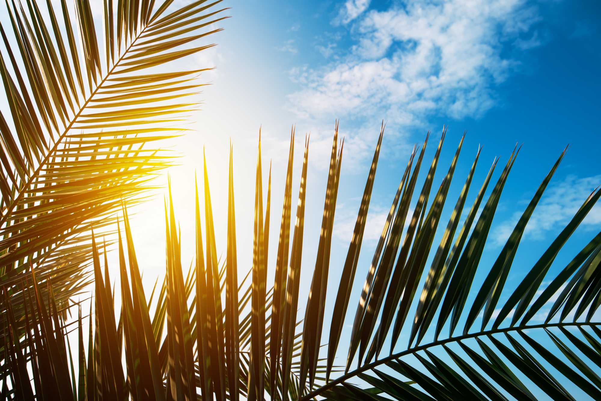 Green palm tree leaves against blue summer sky without ocean