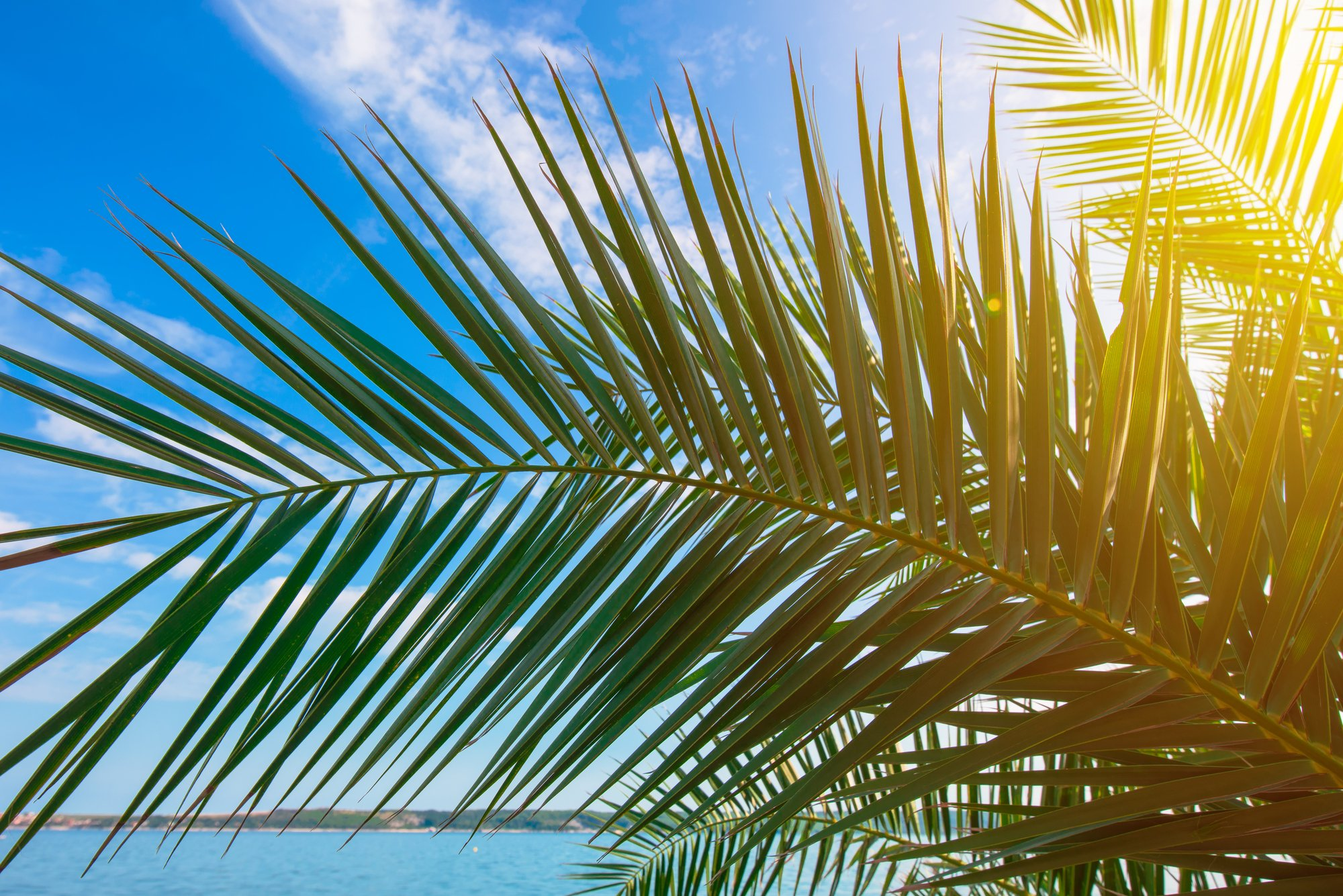 Green palm tree leaves against blue summer sky