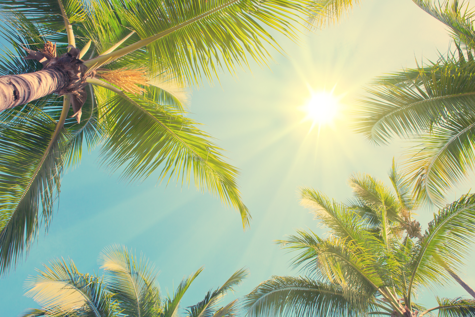 Sunshine between green palm trees. Travel background